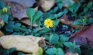 Métodos Para Eliminar La Mala Hierba Del Jardín