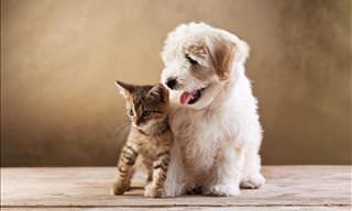 Humor: La Evidencia De Que Perros y Gatos No Son Iguales