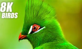 Aprecia Esta Colección De Aves Hermosas En Un Video Ultra HD