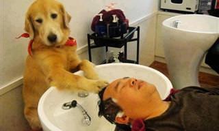 Estos Perros Piensan Como Humanos y Te Harán Sonreír