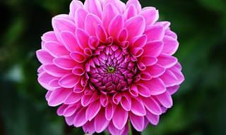 Las Flores Perfectas Para Tu Jardín En Este Verano