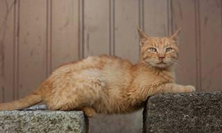 El Mundo De Los Gatos y Su Extraña Lógica