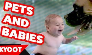Adorables Mascotas Conocen a Un Recién Nacido