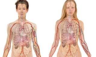 Test: Qué Tanto Conoces Del Cuerpo Humano