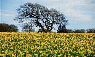 ¡Deténte a Admirar La Belleza De Estos Campos Florales!