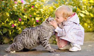 Video: Animales Que No Están De Humor Para Recibir Cariño