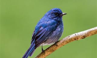 Las 5 Aves Más Bellas De La India