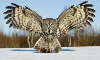 La Danza Magistral De Las Aves Del Mundo