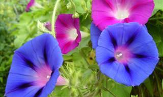 ¿Sabías Que Estas 10 Flores Comunes Son Venenosas?
