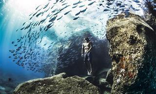Asombrosas Fotografías Ganadoras De Los Pemios Mundiales De La Naturaleza