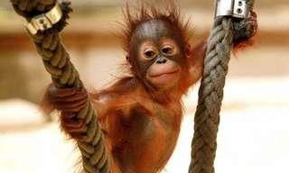 Las Más Encantadoras Fotos De Animales