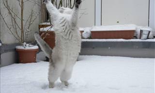 ¿Acaso Los Gatos Pueden Bailar? Obsérvalos En Estas Fotos