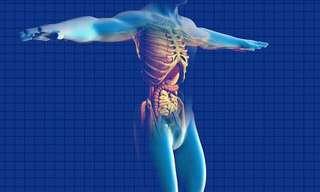 Obstrucción Intestinal: Causas, Síntomas y 10 Tratamientos Naturales
