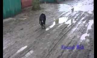 Cuando Las Personas Rescatan Animales