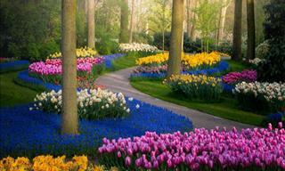 El Jardín De Tulipanes Más Hermoso De Todo El Mundo En 15 Fotografías
