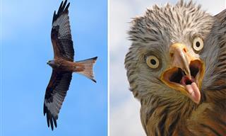 20 Imágenes De Aves Únicas Con Un Toque Bastante Divertido