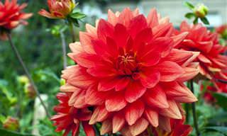 Las 10 Flores Más Hermosas Del Planeta