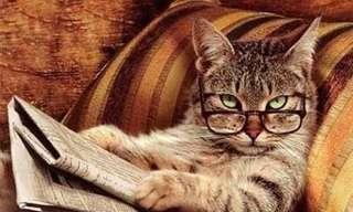 Un Nuevo Día De Gatos Para Disfrutar