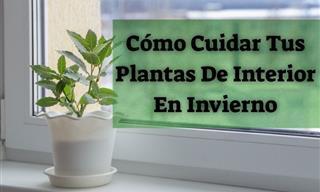 6 Consejos Para El Cuidado De Tus Plantas De Interior En El Invierno
