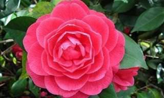 Descubre La Belleza De Las Flores Más Exóticas Del Mundo