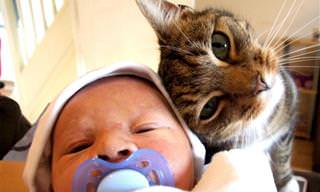 ¡Los Gatos y Los Bebés Forman La Mejor Pareja!