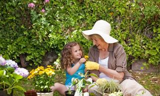 7 Post Sobre El Mundo De La Jardinería y Las Plantas