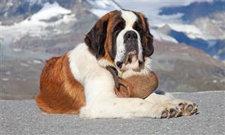Las 10 Razas De Perro Más Leales Que Existen