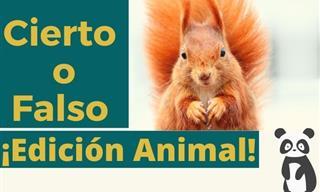 Test De Cierto o Falso:  Edición Animal