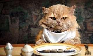 Lo Mejor De La Semana, ¡Día De Gatos!