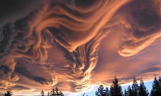 14 Increíbles Ilusiones Ópticas De La Naturaleza