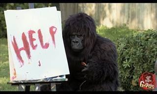 Hemos Visto Zoos, Pero Ninguno Cómo Este