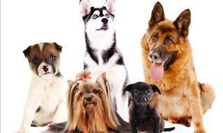 Escucha Los 15 Consejos Que Tu Perro Te Quiere Dar