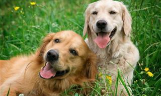 ¡Un Estudio Demuestra Que Tener Un Perro Aumenta La Longevidad!
