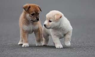 La Ternura Irresistible De Los Cachorros…