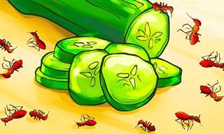 Maneras Naturales De Deshacerse De Las Hormigas En Casa