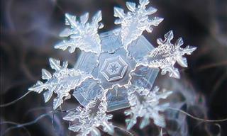 14 Increíbles Imágenes Microscópicas Que Nos Revelan Otro Mundo