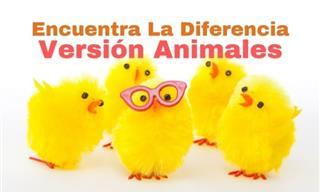 Test: Encuentra Las Diferencias ¡Versión Animales!
