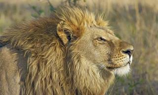 Historia Inspiradora: El Miedo Del León