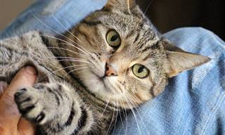 60 Curiosidades Sobre Los Gatos Que Desconocías