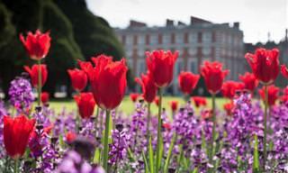 Las Flores Adornar Los Paisajes De Londres