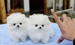 20 Cachorritos Que Derretirán Tu Corazón Con Su Presencia