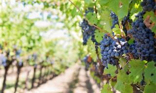 Tiempo De Vendimia: ¿Cuánto Sabes De Vino?