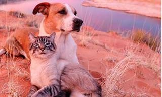 Un Gato y Un Perro En Una Travesía Juntos