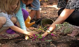 10 Espectaculares Flores Que Puedes Plantar En Tu Jardín