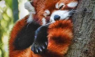 18 Imágenes De La Naturaleza De Animales Pelirrojos