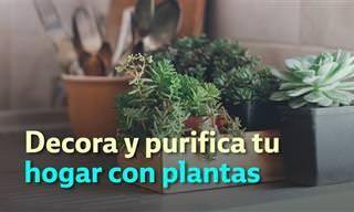 10 Plantas Para Decorar y Purificar Tu Hogar