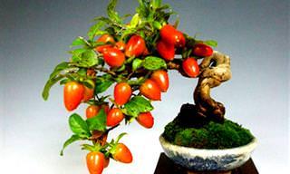 Obtén Fruta Fresca En Casa Cultivando Tu Propio Bonsái