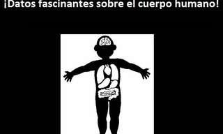 Todo Lo Que No Conocías Sobre Tu Cuerpo…