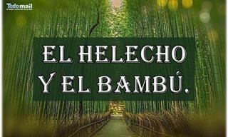 """""""El Helecho y El Bambú"""". Palabras Que Fortalecen El Alma"""
