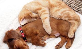20 Lindos Perros y Gatos Que Te Alegrarán El Día